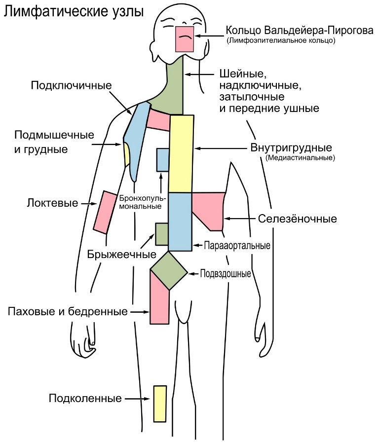 Методика ручного лимфодренажного массажа тела