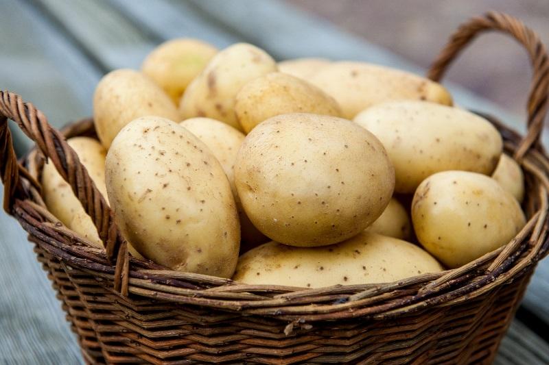 Благодаря большому содержанию калия картофель способствует выведению из организма воды и поваренной соли, что улучшает обмен веществ, поэтому картофель считается незаменимым продуктом в диетическом питании