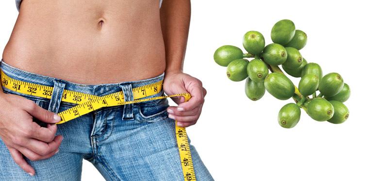 Хлорогеновая кислота для похудения