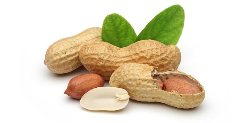 Взрослое растение арахиса продуцирует 40 стручков, которые позже вырастают в узнаваемый нами арахис, причем во время созревания стручки мигрируют под землю