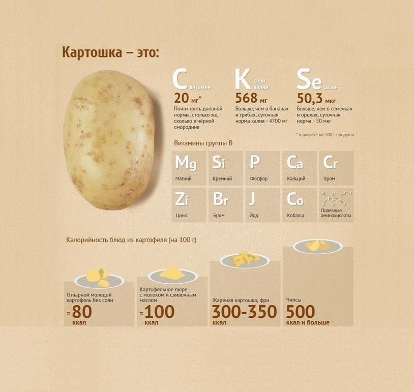 Чем полезен картофель